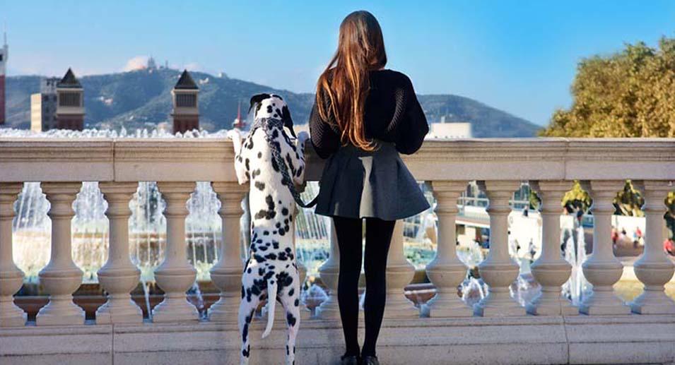 Oferta animal doméstico en Barcelona